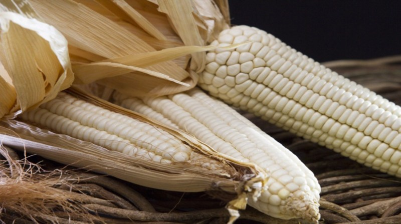 milho branco paulo lanzetta 2