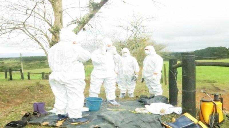 treinamento emergecia febre aftos parana divulgacao adapar