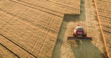 Cooperativas do Sul buscam conhecimento sobre trigo do Cerrado