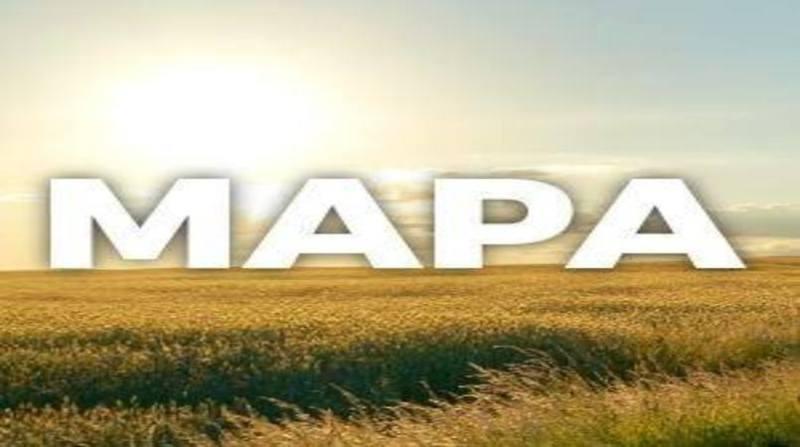 ARTE MAPA