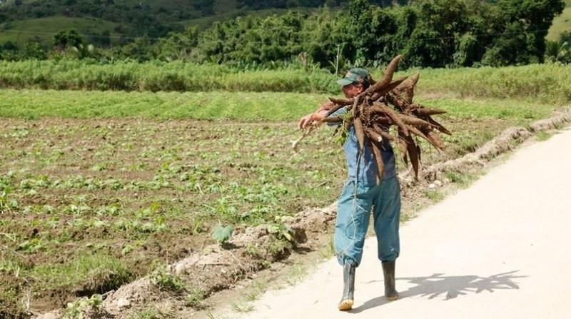 agricultura familiar agricultor mandiooca censo LiciaRubinstein agencia ibge