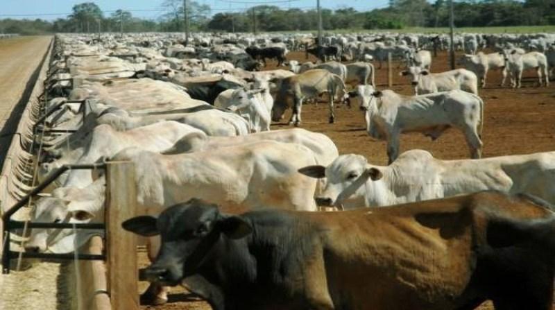 bovinos terminacao 2 curral alimentacao seagro governo tocantins