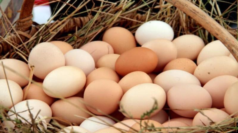 ovos embrapa 28 10 19