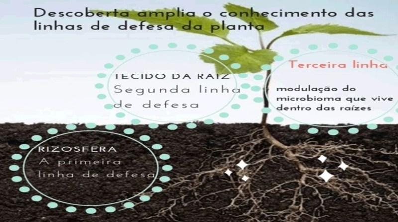 arte embrapa mecanismo de defesa das plantas.jpg