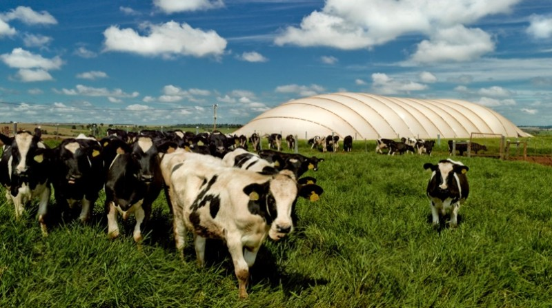 bovinos biodigestores biogas divulgacao