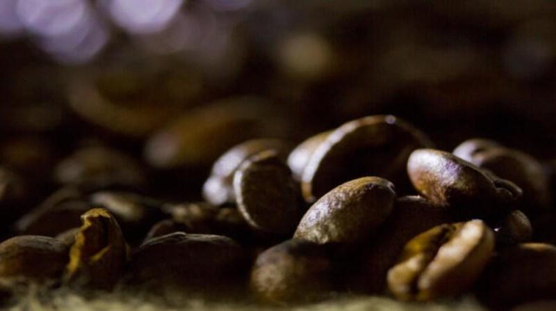cafe graos vale este paulo lanzetta embrapa 9 10 19