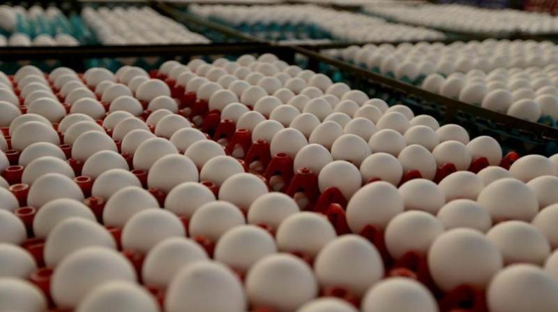 ovos brancos 4 paulo pinto fotos publicas