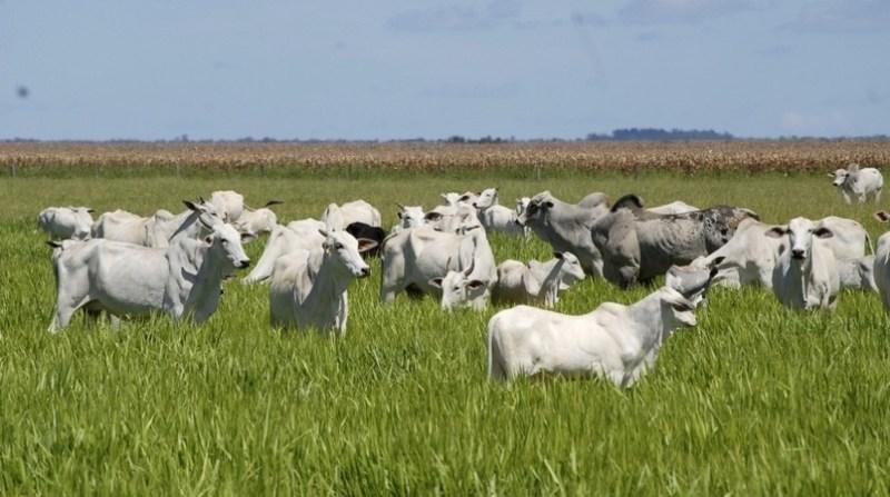 bovinos agricultura gov to 17 1 2020