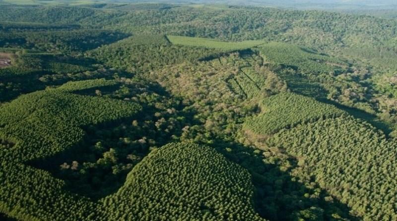floresta klabin manejo floretal mosaico klabin divulgacao