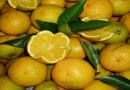 Cepea: Demanda eleva preços da laranja de qualidade; tahiti recua
