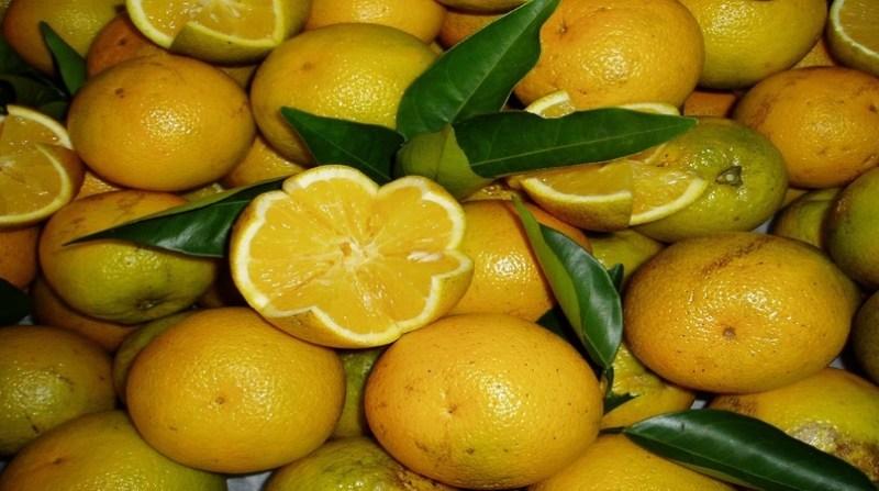 laranja pera 17 1 2020