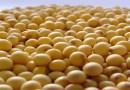 DF é destaque na produção de sementes de soja de alta qualidade