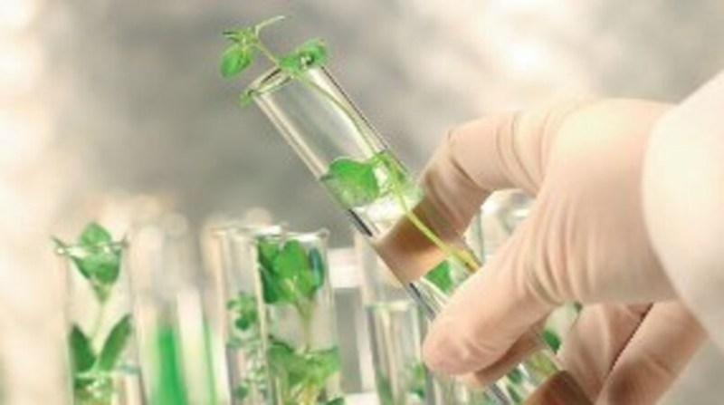 tubo de ensaio recursos geneticos embrapa