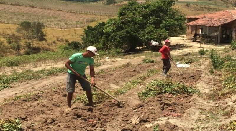 agricultores agencia alagoas censo 1