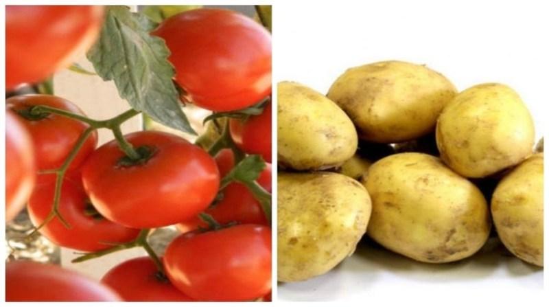 montagem tomate batata