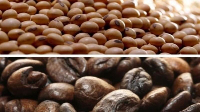 soja cafe 1 montagem paulo lanzetta embrapa