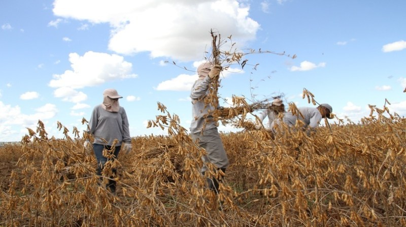 soja colheita 2 elio rizzo