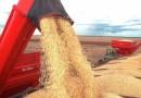 Aumento da oferta e dólar forte elevam liquidez e preços da soja sobem no Brasil