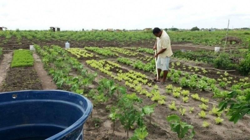 agricultura familiar agencia alagoas 16 10 19