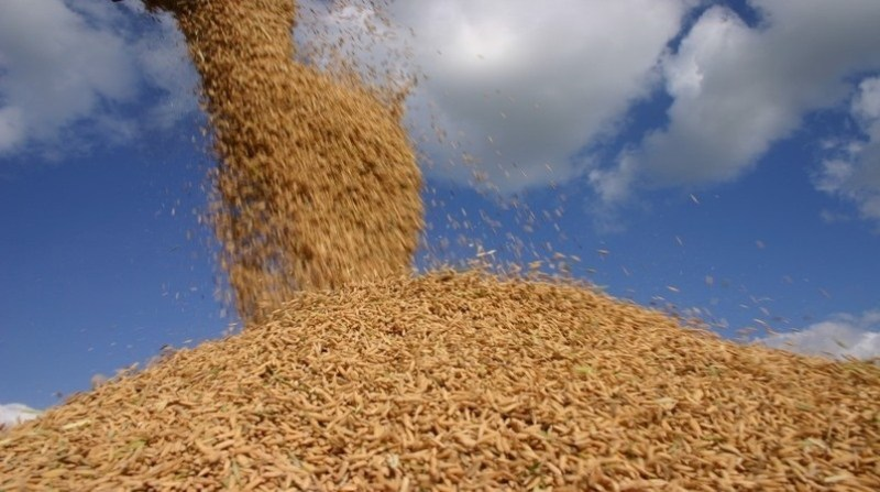 arroz casca irga 13 02 2020