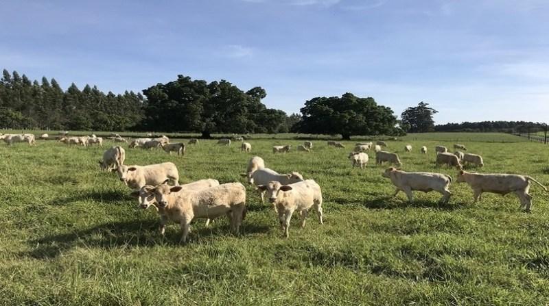 bovinos pasto ana maio embrapa 04 02 2020