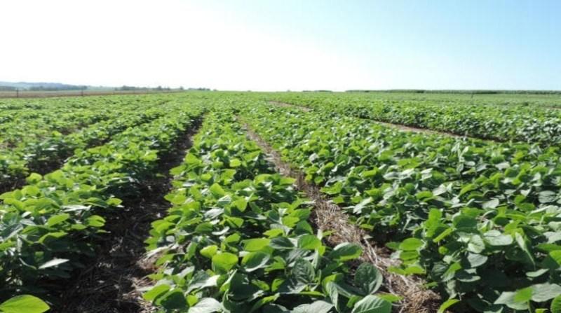 soja plantacao verde 28 3 2020