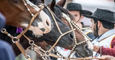 Covid-19: Mercado do cavalo Crioulo se mantém firme com leilões virtuais
