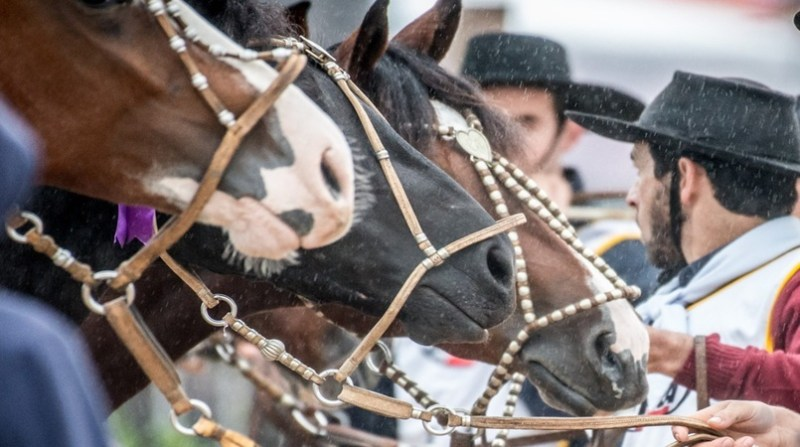Cavalo Crioulo - Credito Fagner Almeida Divulgação
