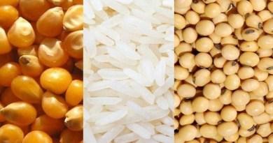 Soja supera R$ 100 a saca, milho, R$ 60, e arroz, R$ 50, diz Cepea