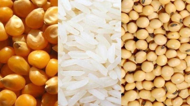 soja milho arroz amipa divulgacao