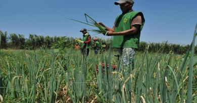 Município do ES revolta técnicos agrícolas ao oferecer salário de R$ 568,99