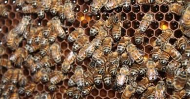 Movimento Colmeia Viva ajuda a proteger as abelhas, diz apicultor paulista