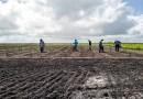 Plantio de trigo no Nordeste? Embrapa avalia potencial do cereal na região