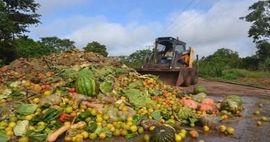 931 milhões de toneladas de alimentos foram para o lixo em 2019, diz ONU