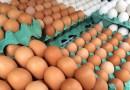 ABPA: Exportações de ovos têm alta de 142,5% no primeiro trimestre