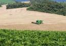Colheita de feijão chega a 82% no Paraná, segundo o Deral