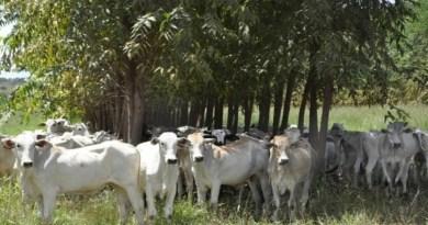 Fazenda de MS é a 1ª do Brasil a ter certificado para carne carbono neutro