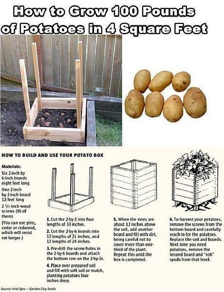 cultivare inteligenta cartofi