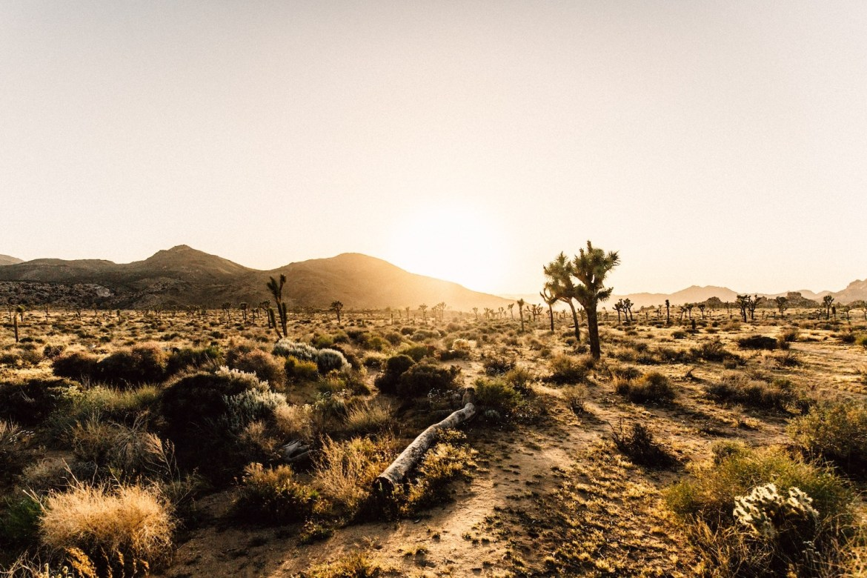 Pecuária ajuda a reduzir desertificação e os incêndios