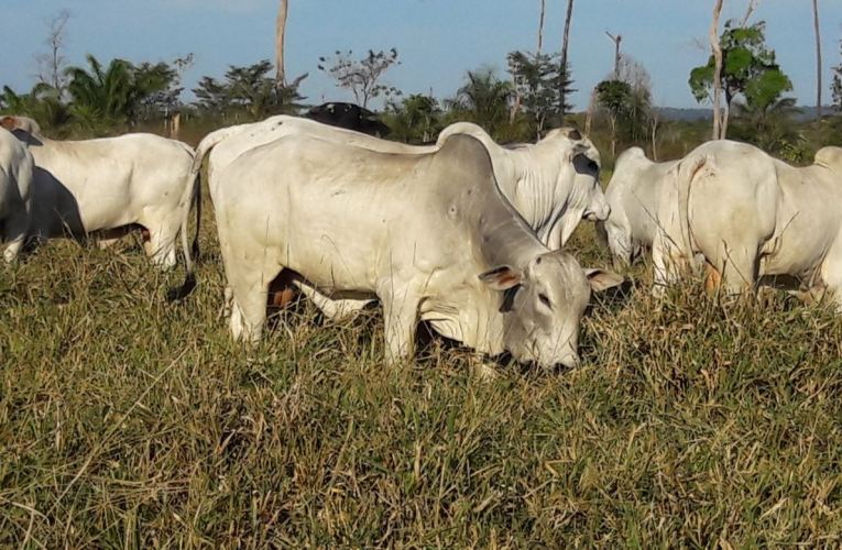 Panorama do mercado obriga pecuaristas a recalcular rota visando maior lucratividade na fazenda