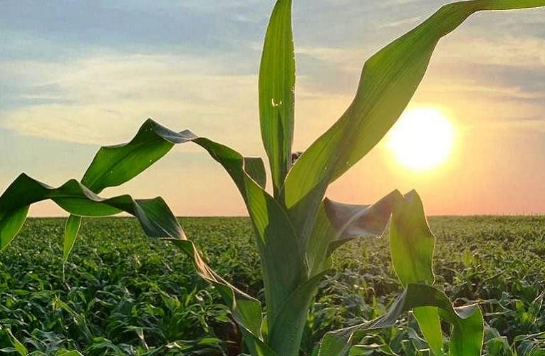 Agricultura natural está ganhando força no Brasil