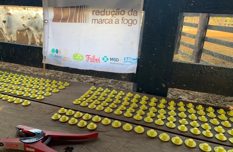 Fazenda substitui marca a fogo por brinco de identificação e deixa de fazer 18 mil marcações no ano