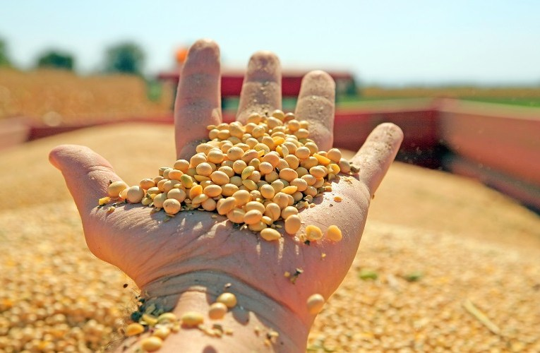 Negociações da soja prejudicada no Brasil