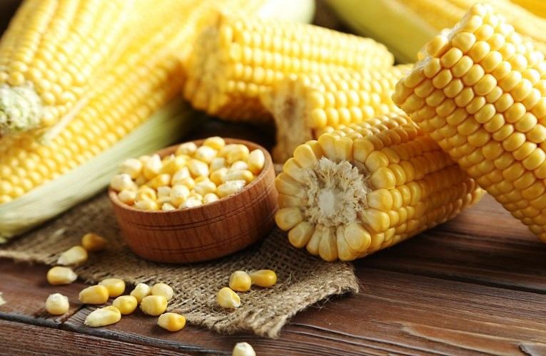 MP para zerar PIS/Cofins na importação de milho