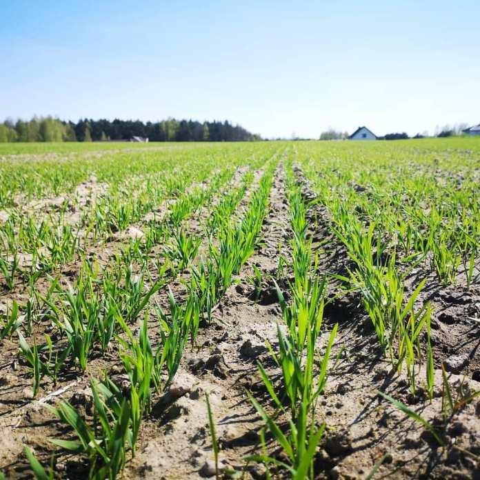 Wniosek KRIR o uruchomienie dodatkowych środków na dopłaty do składek ubezpieczeń rolnych