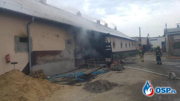 40 tysięcy kurcząt spłonęło w pożarze w Perzynach