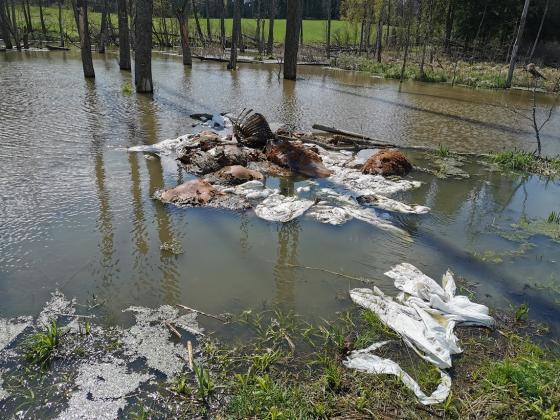 Rozkładające się szczątki bydła porzucone w lesie