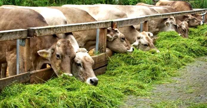 AfD, Albert Stegmann, CDU, FDP, Gero Hocker, Gospodarka, mięso, Niemcy, Polityka wewnętrzna, Rolnictwo, żywność