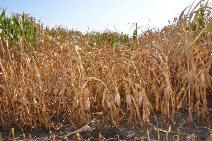 rolnicy, pomoc dla rolników, susza, straty w gospodarstwach rolnych, wnioski o pomoc dla rolników, program retencji, magazynowanie wody, problem suszy w Polsce, Krajowa Rada Izb Rolniczych
