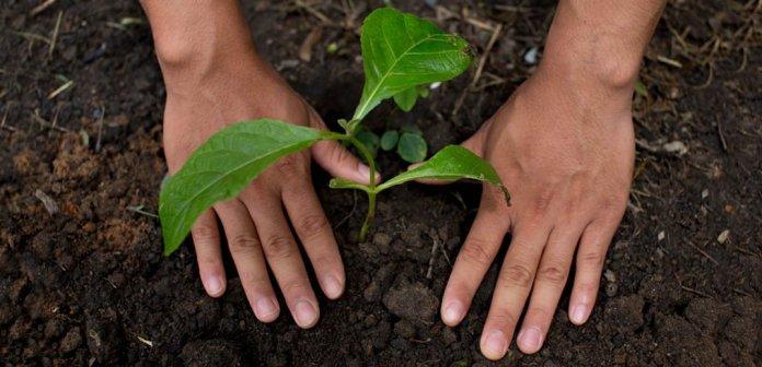 Nestlé wspiera rolnictwo regeneracyjne